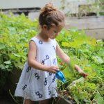 10 Zero-Waste Tips For Eco-Friendly Gardening